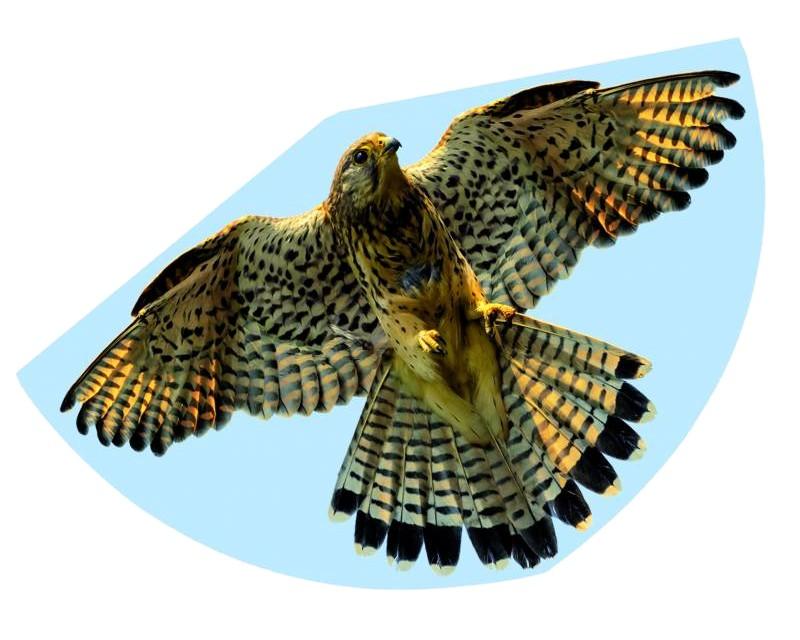 Воздушный змей Paul Gunther Сокол